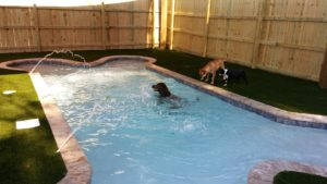 Swimming Pool fors dogs